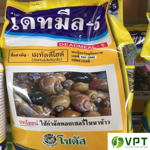 ba moi diet oc Thai Lan