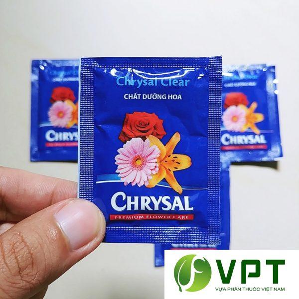 chrysal duong hoa lau tan