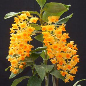 6-30-30 duong hoa