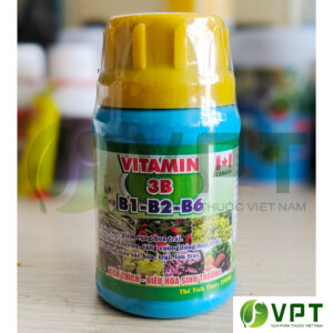 Vitamin 3B B1-b3-b6 chống sốc, kích thích sinh trưởng